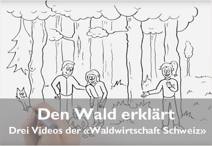 video_schweizer_wald_432x298px